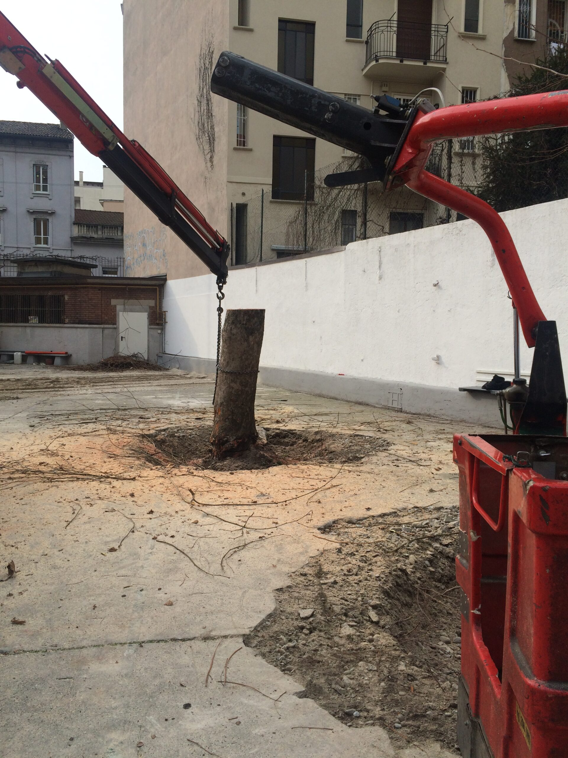 4. Sradicamento alberi mediante ancoraggio e sollevamento meccanico: lavori in corso.